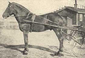 islantilaisia hevosten nimiä